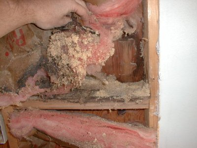 Carpenter Ant Frass in wall.