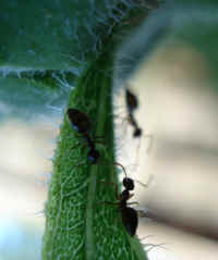 small ants on a plant